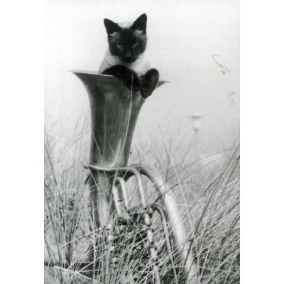 Postkarte - Tenorhorn mit Katze