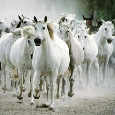 all-the-pretty-little-horses-arr-jeffrey-douma-